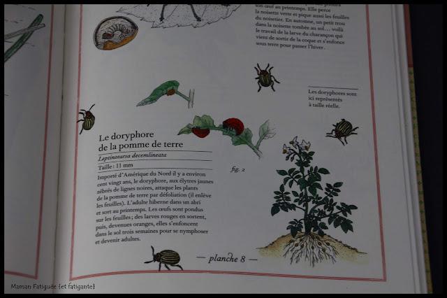 inventaire illustré fleurs insectes