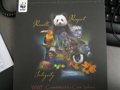 Alyssum At World Wildlife Fund First Impressions Summer In The Field