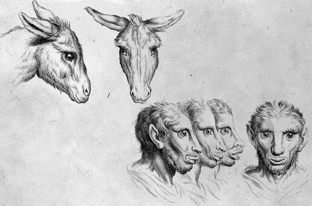 07-Donkey-Animal-Transformations-Drawings-from-the-1600s-www-designstack-co