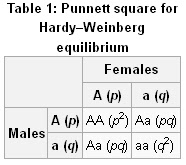 how to calculate allele frequency using hardy weinberg