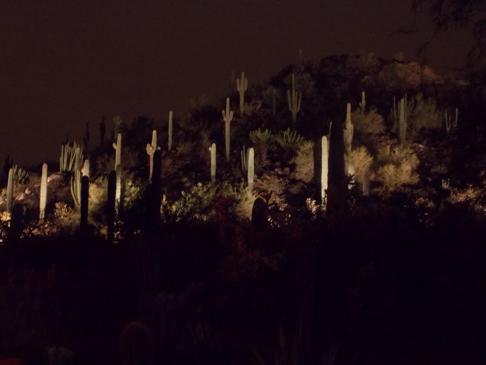 Las Noches De Las Luminarias 2012 At Desert Botanical Garden