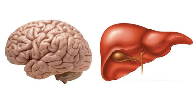 Mëlçia e zmadhuar lidhet me zvogëlimin e Trurit