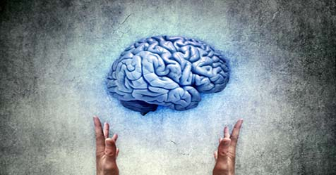 Mystery and Fact About Human Brain You Should Know