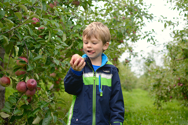 Fall Bucket List: Apple Picking | My Darling Days