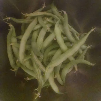 Bush Green Beans - The Easiest Edible Plants To Grow According To Someone With A Black Thumb