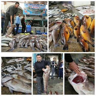 Gaza Palestina Banjir Ikan Segar,