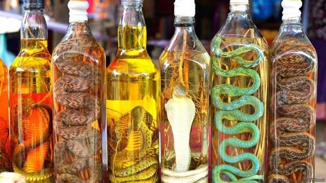 Wine ular