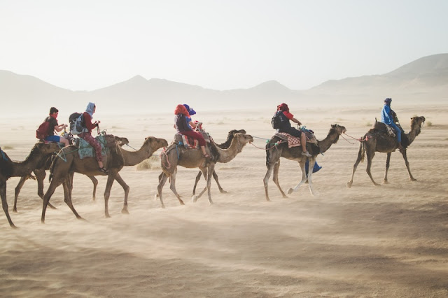 Touring on Camels at Sahara Desert