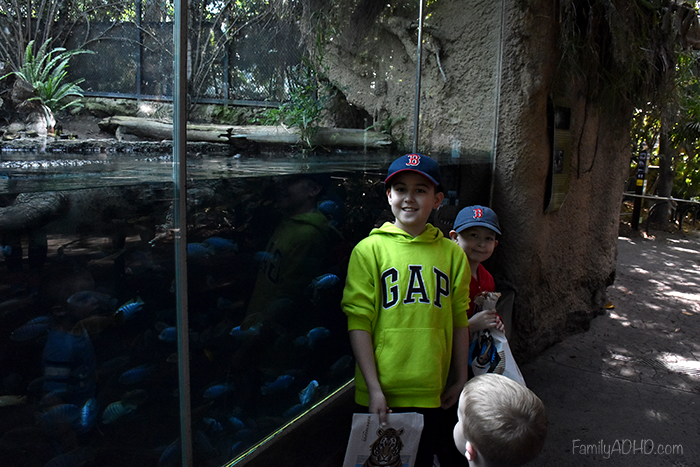 San Diego Zoo Tips California Family Travel Guide with Special Needs Kids