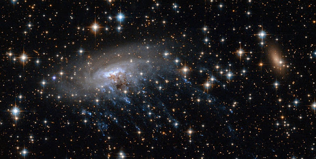 "The spiral galaxy ESO 137-001 is an example of a ""jellyfish"" galaxy, because blue tendrils of star formation stream away from it like jellyfish tentacles. NASA's Webb Space Telescope will study those sites of star formation to learn more about conditions there. Credits: NASA, ESA"