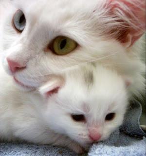 اجمل قطط %D9%82%D8%B7%D8%B76.