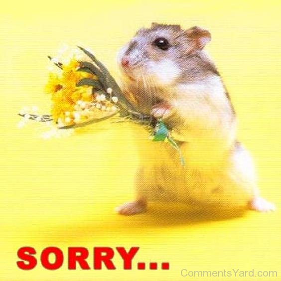 Cute Sorry By Rat