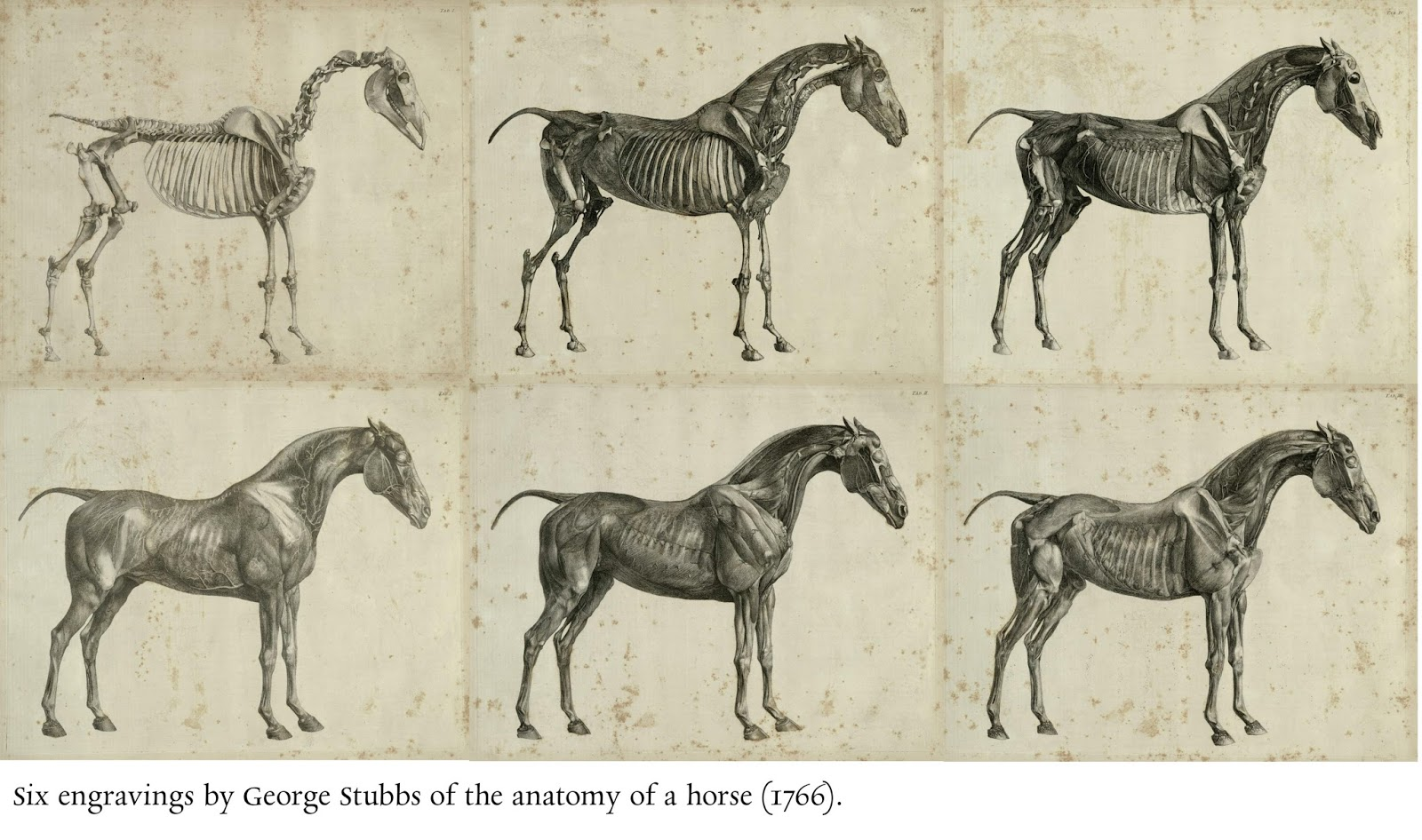 Data Deluge Anatomy Of The Horse 1766