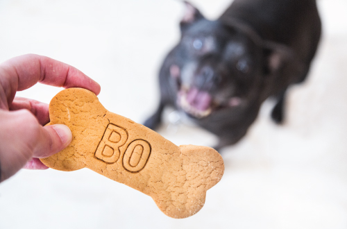hand holding biscuit with dog looking
