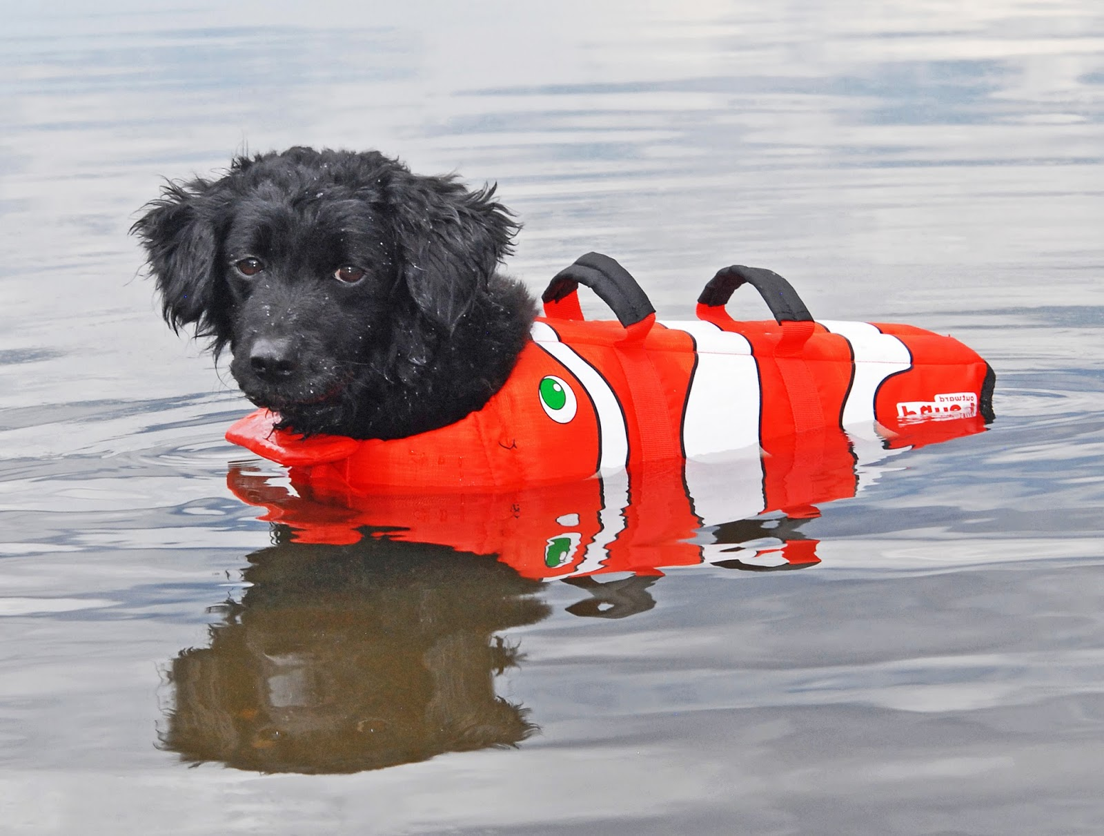 Review Of Outward Hound Dog Life Jacket