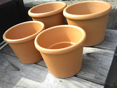 ビオトープ 鉢