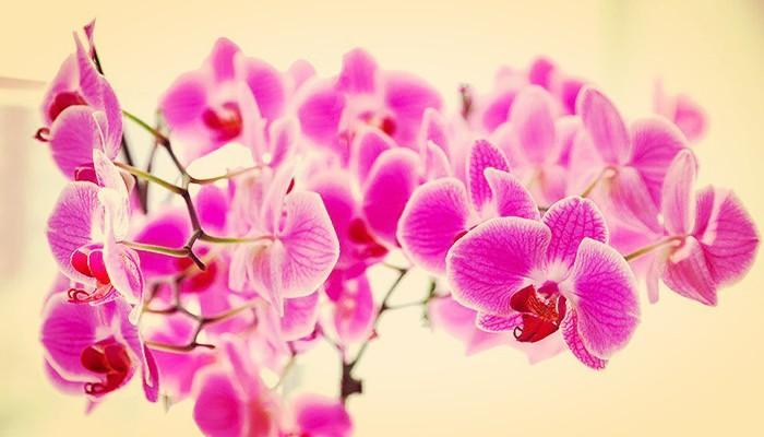Cuidar orquídeas