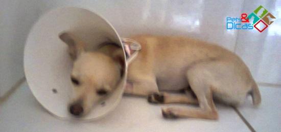 PERGUNTE AO VET #3: Cachorra castrado não quer comer