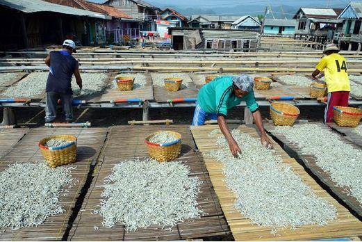 Pengeringan Ikan Laut