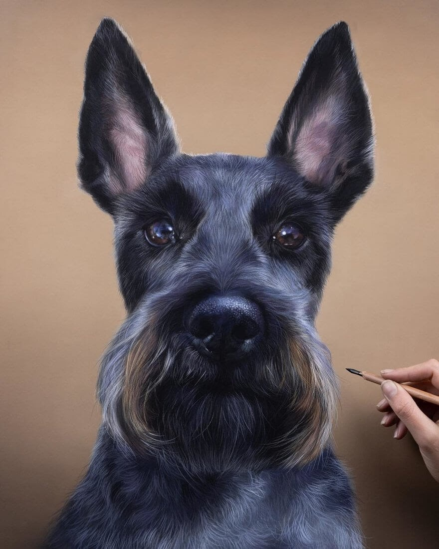 06-Schnauzer-Patricia-Otero-Cats-and-Dogs-Portrait-Artist-www-designstack-co