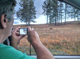 Deer in Custer State Park, South Dakota