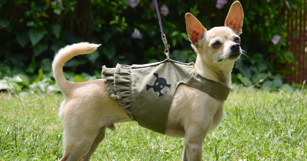 The Dog Geek: Product Review: Doggles Jean Harness Dress