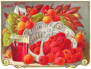 fruit raspberry japanese wine image digital download illustration