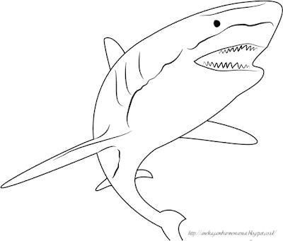Gambar Mewarnai Ikan Hiu 1