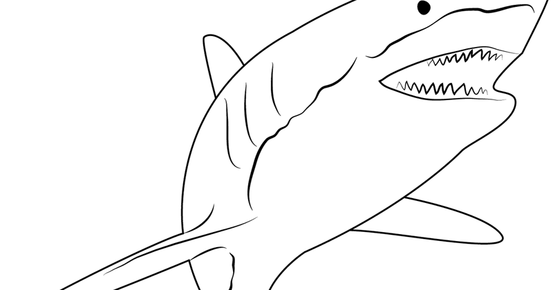 49+ Gambar Ikan Paus Mewarnai