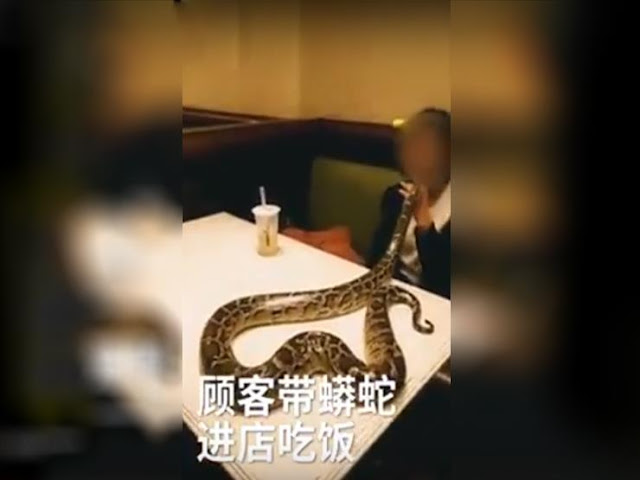 صيني يتناول العشاء مع ثعبان.. ومدير المطعم يفقد وعيه (فيديو)