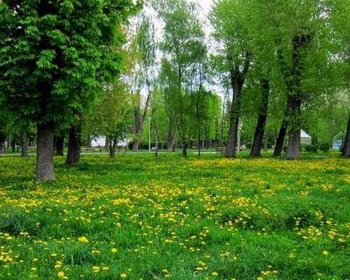 Spring time in the park of flowers