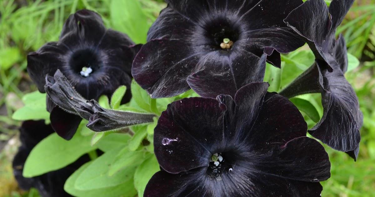 Gothic garten schwarze blumen und figuren f r den themengarten - Gothic einrichtungsideen ...