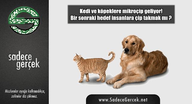 Kedi ve köpeklerden sonraki hedef, insanlara çip takmak mı?