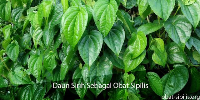 obat sipilis daun sirih