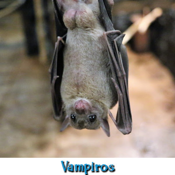 Los vampiros tienen cabida en el especial Halloween de Mini-Fu