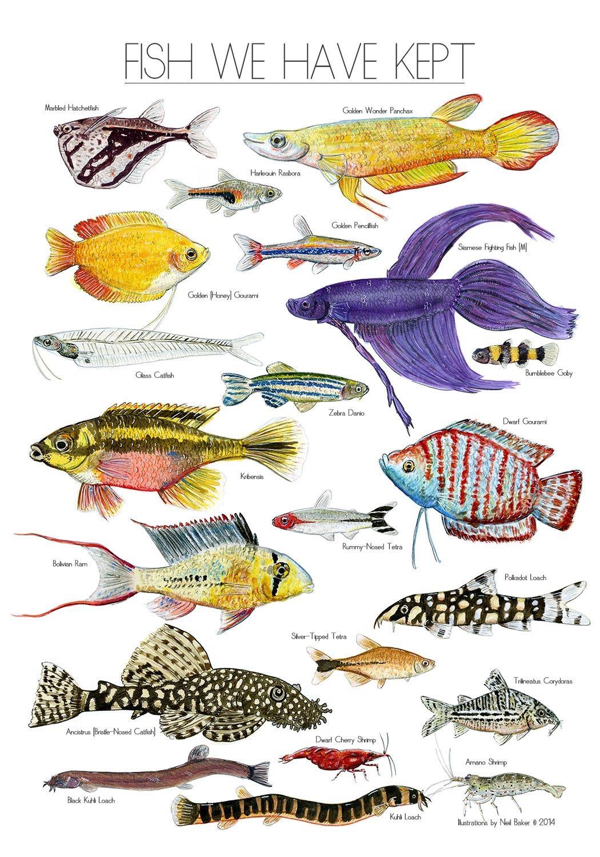 Peixes Para Aquários