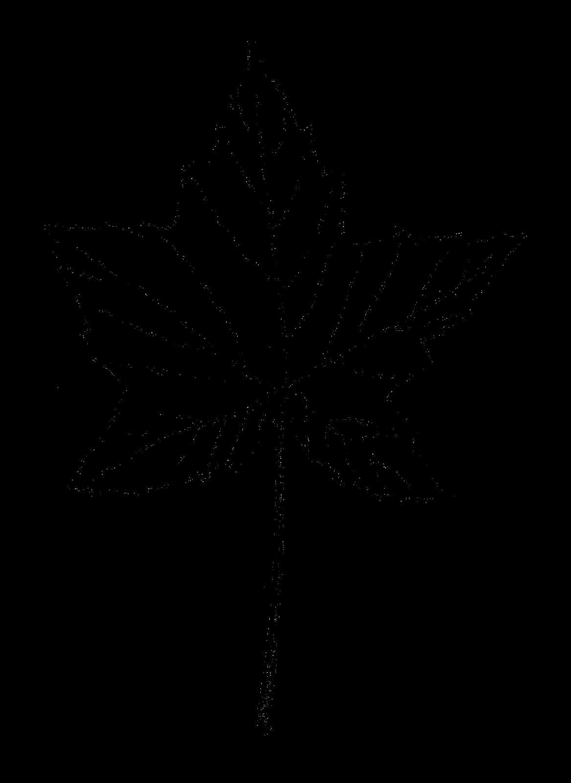 Digital Stamp Design Maple Leaf Image Botanical Art