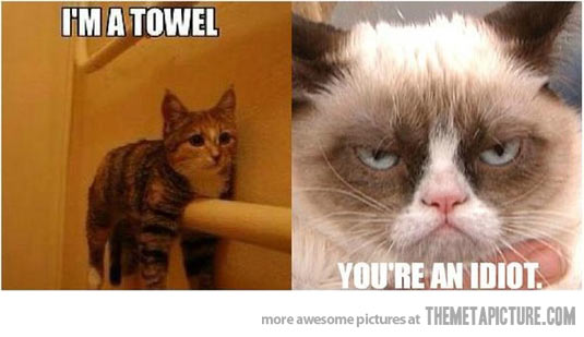 funny grumpy cat pictures - photo #25