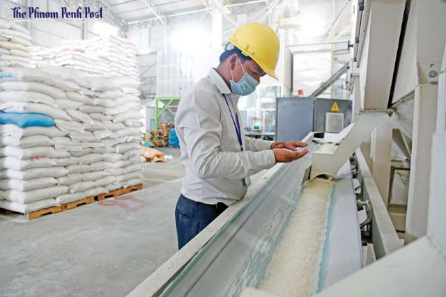 A man inspects milled rice at a processing plant in Phnom Penh's Por Sen Chey district last year. Heng Chivoan