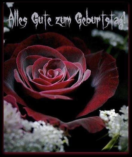Schne rote Rose Alles Gute zum Geburtstag