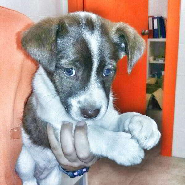cachorra de tamaño mediano