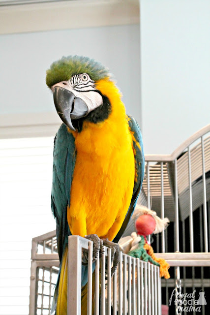 Ritz Kids is the Ritz-Carlton, Amelia Island's clubhouse for kids ages 5-12 with the resort's mascot parrot, Princess Amelia, overseeing most of the activities in the club.