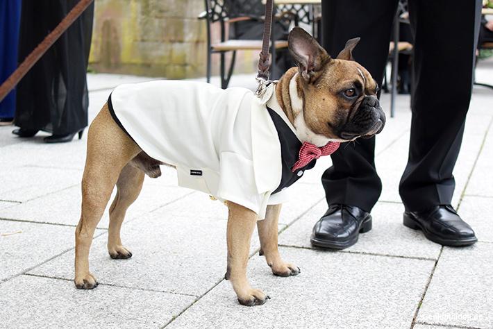 Hundesmoking für Hochzeit