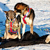 Weekly Mushing News Round Up (July 6)