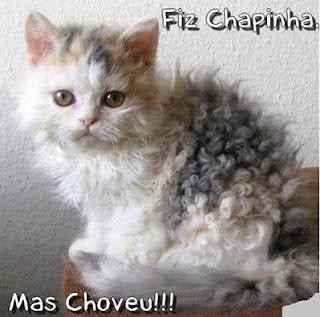 Um gatinho branco com manchas cinzas e amareladas no dorso, a pelagem é abundante e crespa, como se tivesse feito permanente, está sentado sobre um puff marrom. No topo lê-se: Fiz chapinha; e no rodapé: Mas choveu!!!