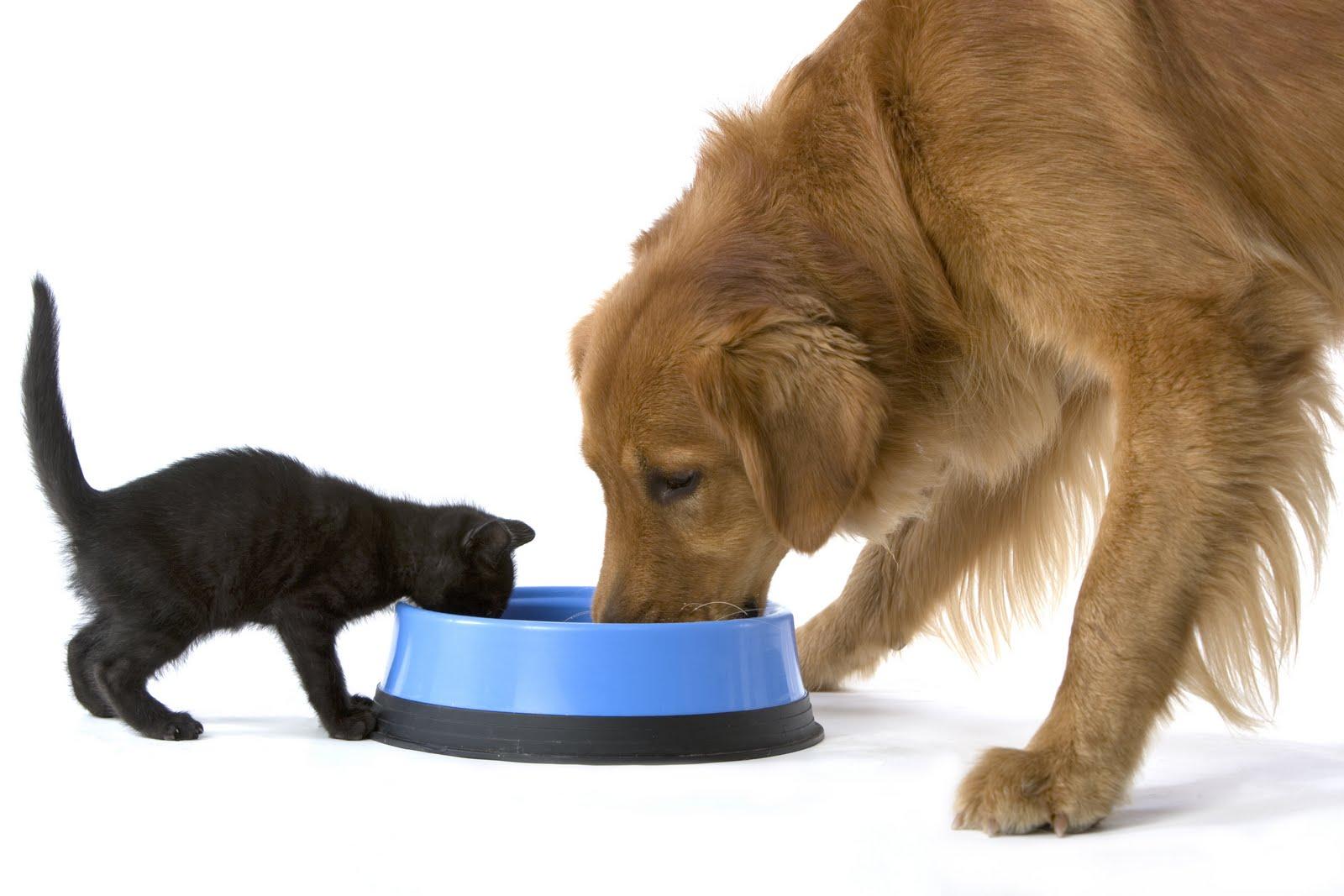 Resultado de imagen para perros y gatos comiendo