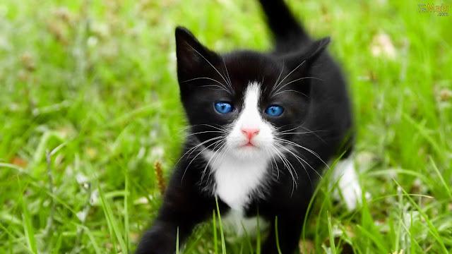 gatinhos-fofos