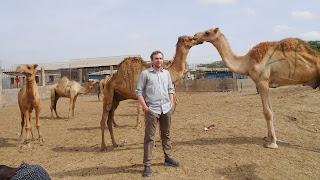 in the Somaliland Camel Market