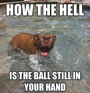 Dog Humor: Why is the ball still in your hand?