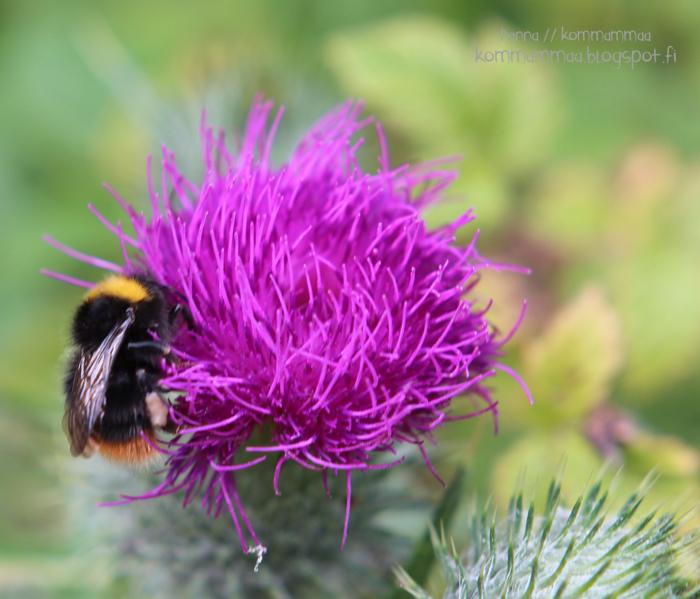 örö kesä veneily mehiläinen luonto
